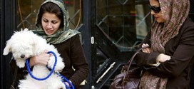 Iran: Dog owning punishable by 74 lashes