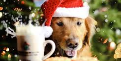 Canine Christmas poems