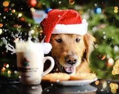 Canine Christmas poems