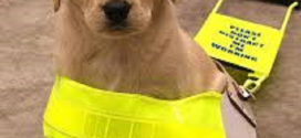 Life saving Retriever in line for national award
