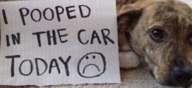 Dog shaming on Instagram