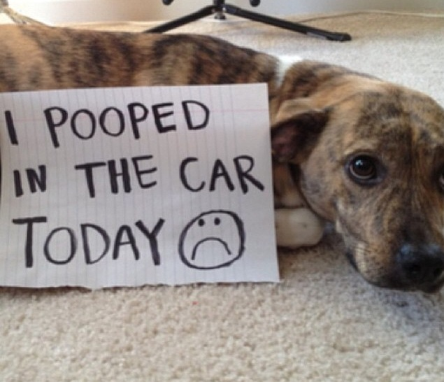 Credit: @justdogshaming