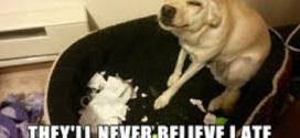 The dog ate my homework… No, seriously!