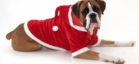 Secret Santa for the dog lover in your office