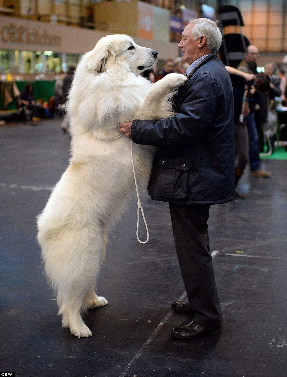 man with his Pyrenean Mountain Dog on day 1. Photo: EPA images