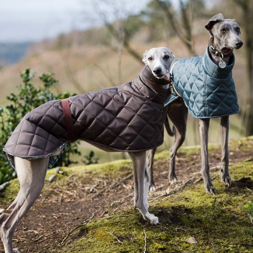 Best Greyhound Coats Coats For Greyhounds