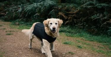Slate Grey Cable Knit Dog Jumper by Sotnos