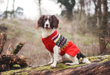 Sotnos Fairisle Red Dog Jumper 2