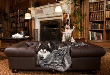 Real Leather Dog Sofas UK