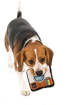 Chelsea Dogs Instagram Dog .