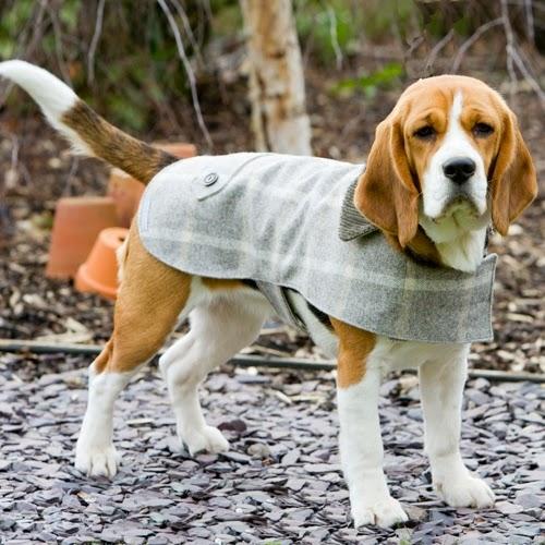 Luxury British Dog Coats Chelsea Dogs