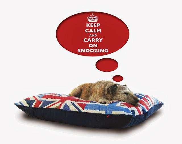 About Chelsea Dogs Luxury Pet Boutique