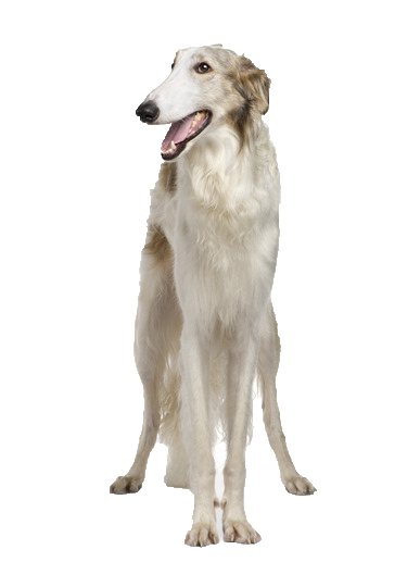 Borzoi Beds Collars And Accessories