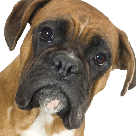 Boxer - Beds, Collars and Accessories