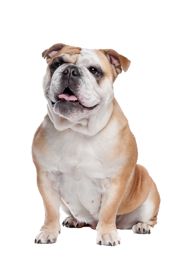 Dog Beds For British Bulldogs