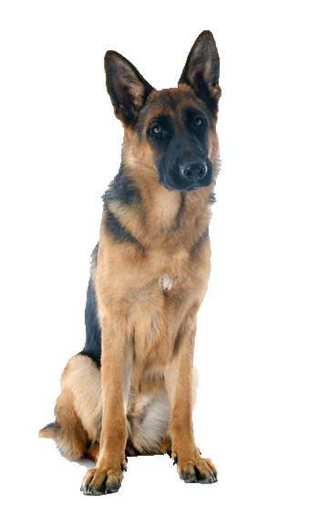 German Shepherd - Beds, Collars and Accessories