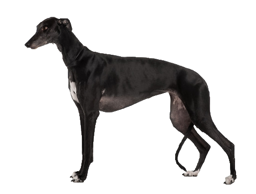 Greyhound Collars Large Dogs