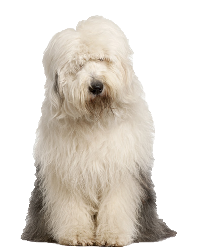 Olde English Sheepdog - Beds, Collars and Accessories