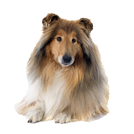 Collie - Beds, Collars and Accessories