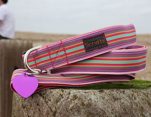 Mivvi Stripes Designer Dog Collar and Lead Set