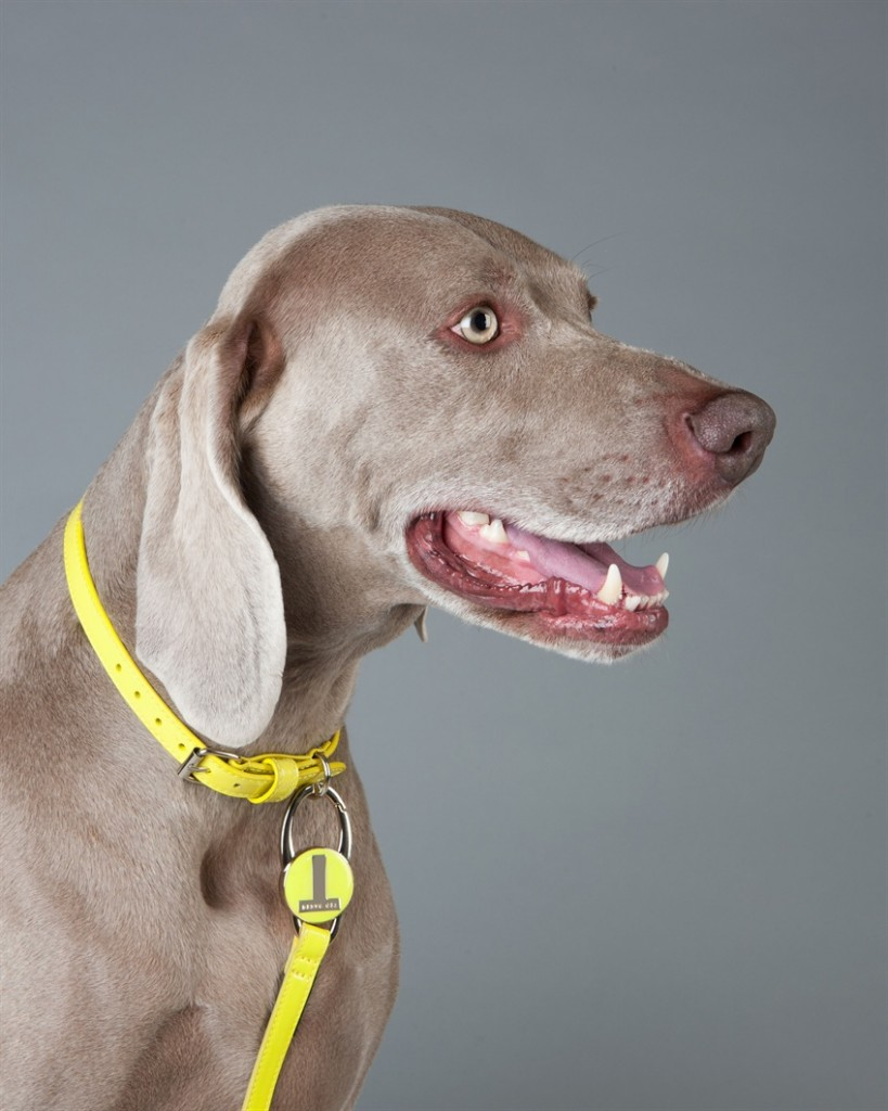 patent-dog-collar-ted-baker-bright-green-yellow 2