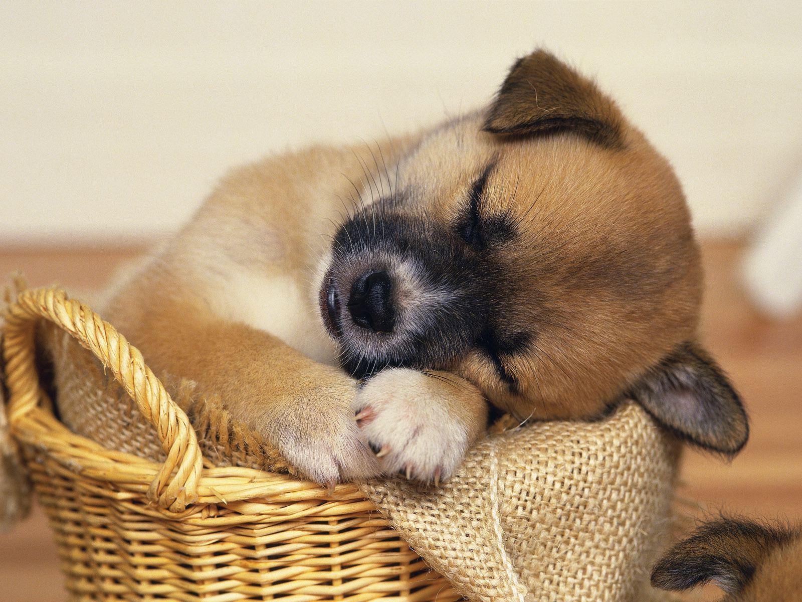 top 10 cutest sleeping puppies
