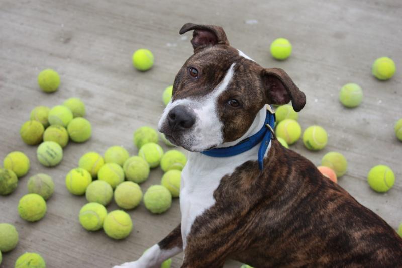 balls dog