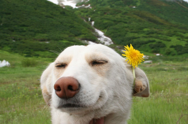 Happy Flower Dog