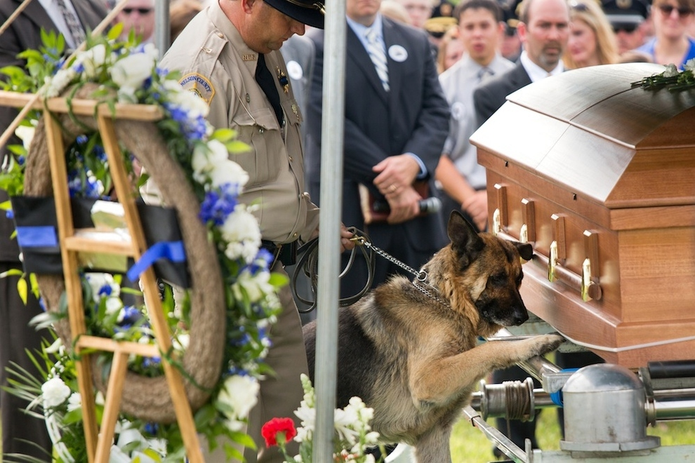police dog says good bye to his fallen partner