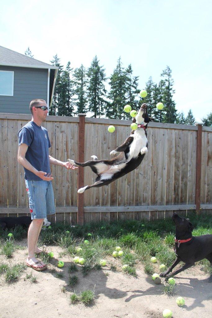 tennis balls dog