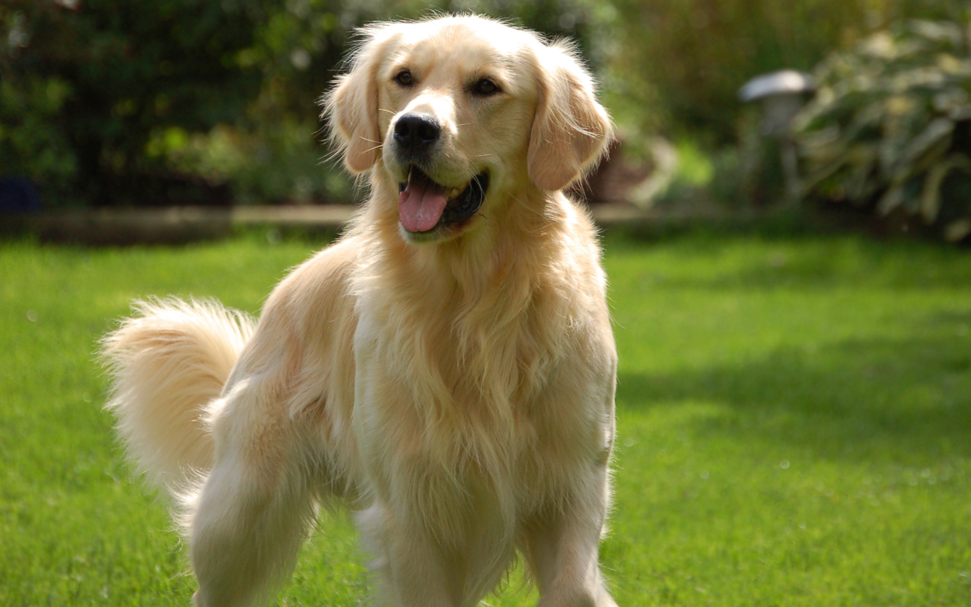 Dogs Breeds Used In Dog Therapy Small Dogs