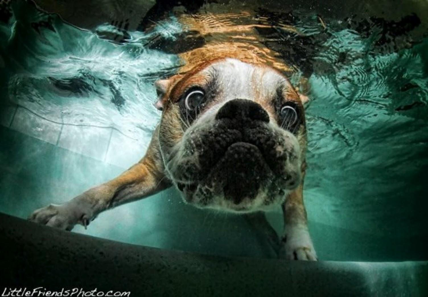 Seth Casteel's Underwater Dogs 1