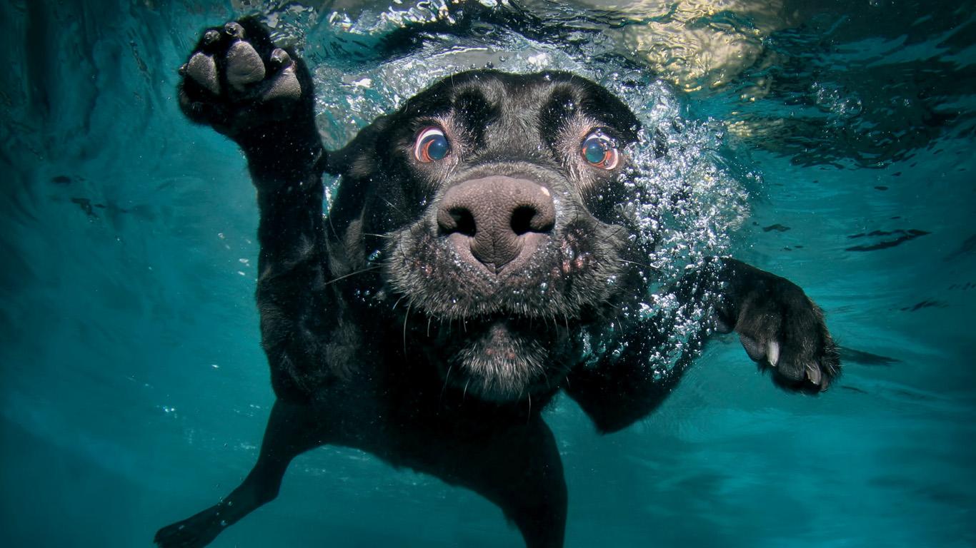 Seth Casteel's Underwater Dogs 10