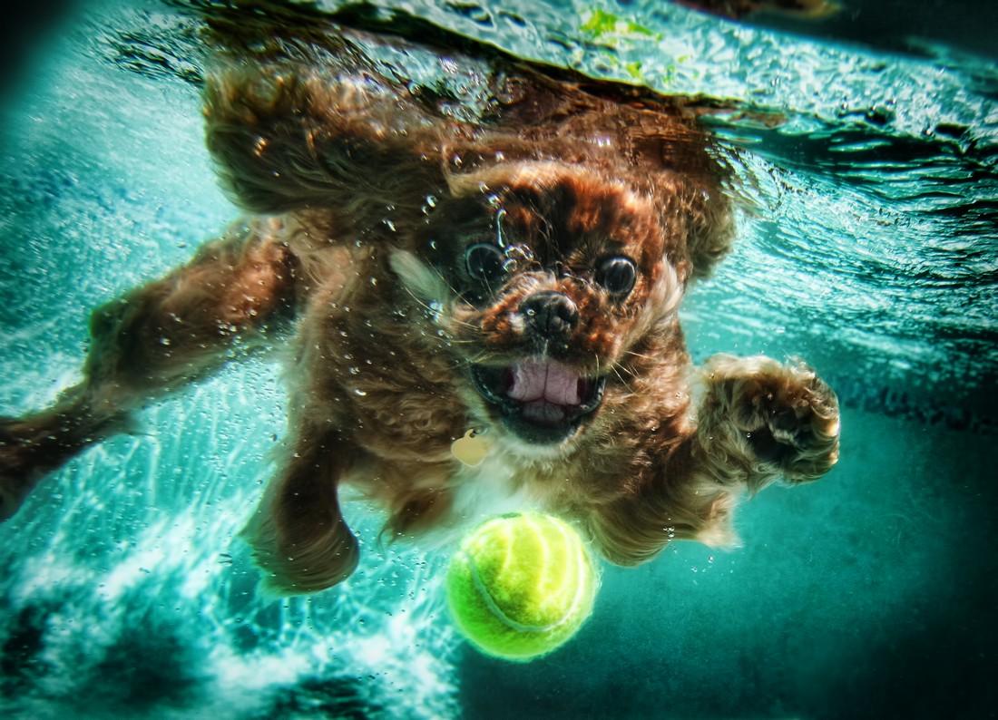 Seth Casteel's Underwater Dogs 2