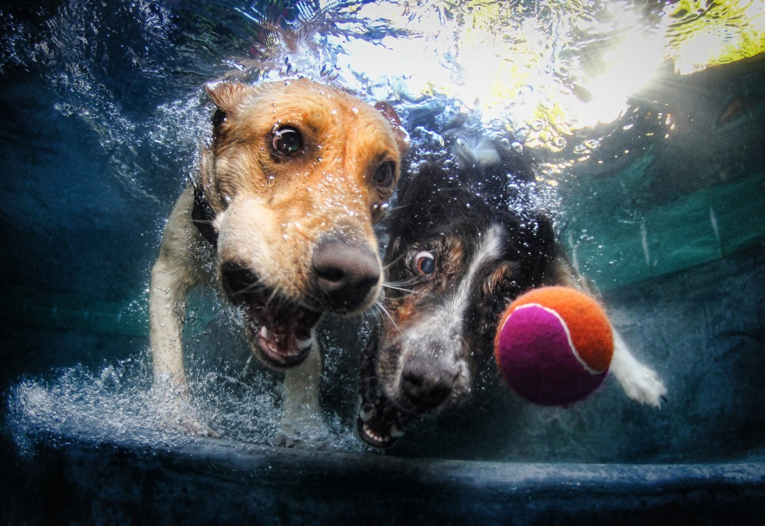 Seth Casteel's Underwater Dogs 3