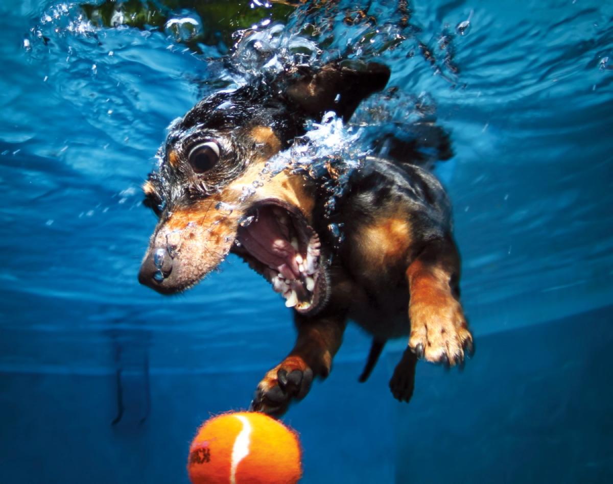 Seth Casteel's Underwater Dogs 4