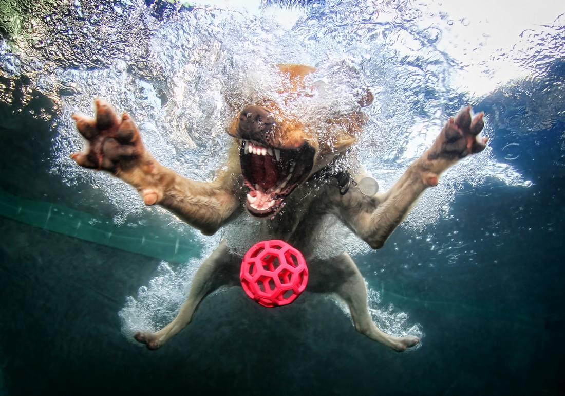 Seth Casteel's Underwater Dogs 5