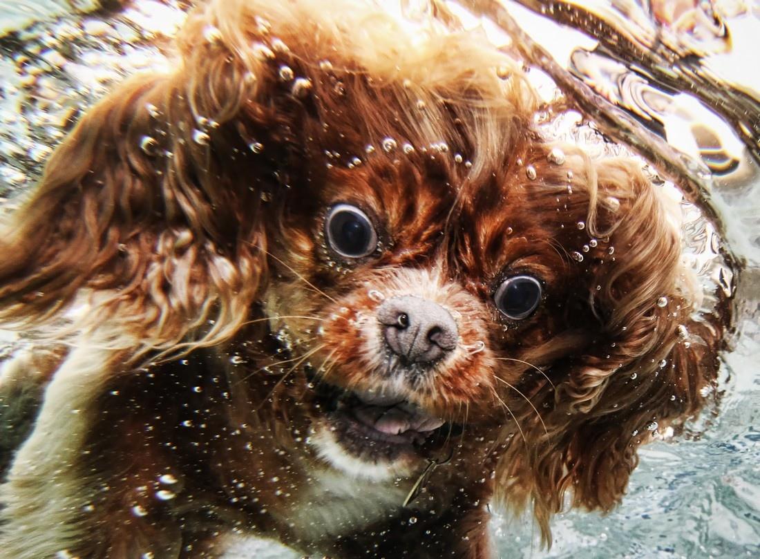Seth Casteel's Underwater Dogs 6