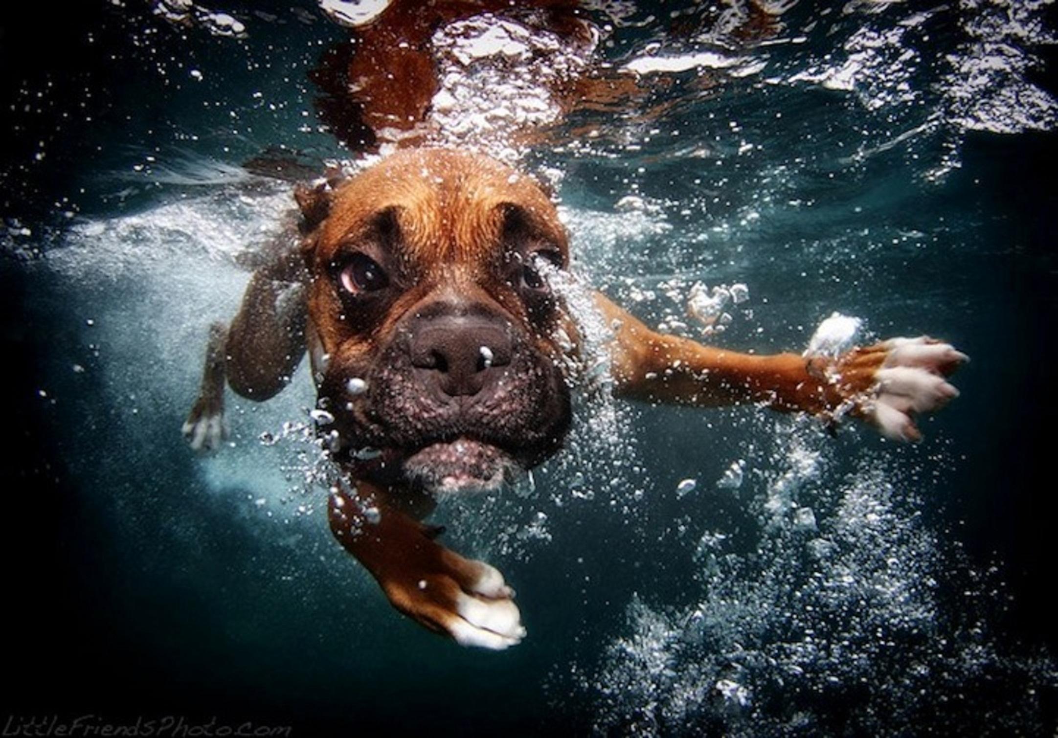 Seth Casteel's Underwater Dogs 7