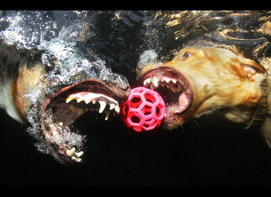 Seth Casteel's Underwater Dogs 8