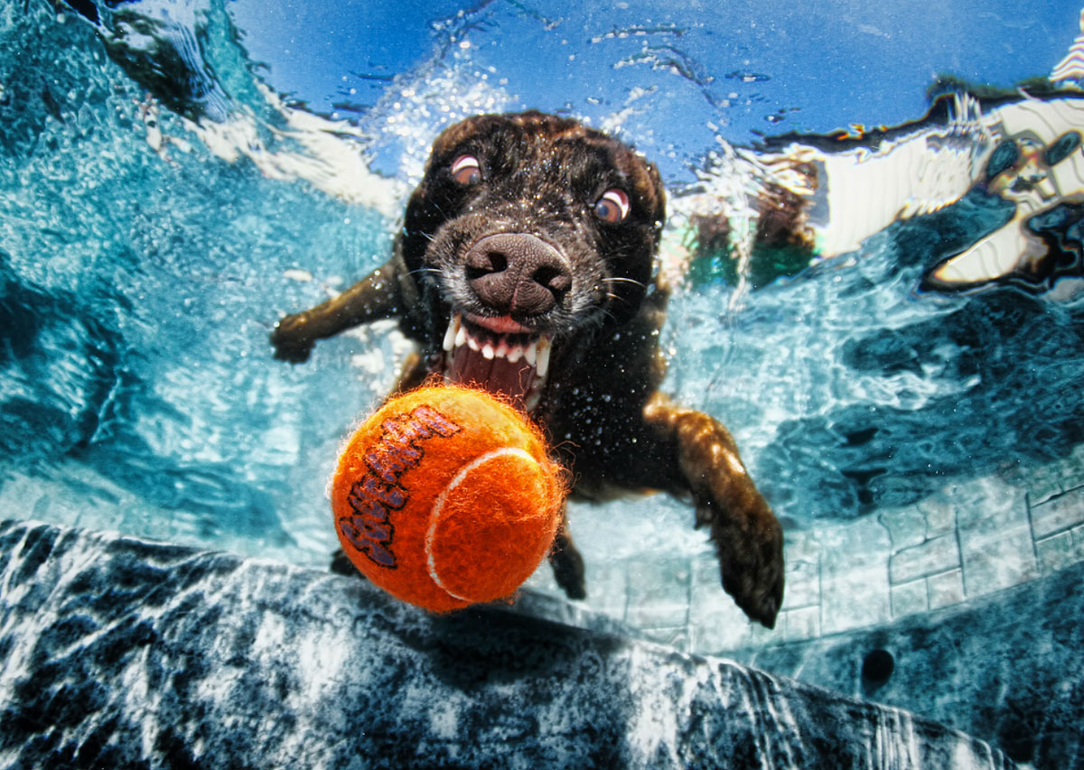 Seth Casteel's Underwater Dogs 9