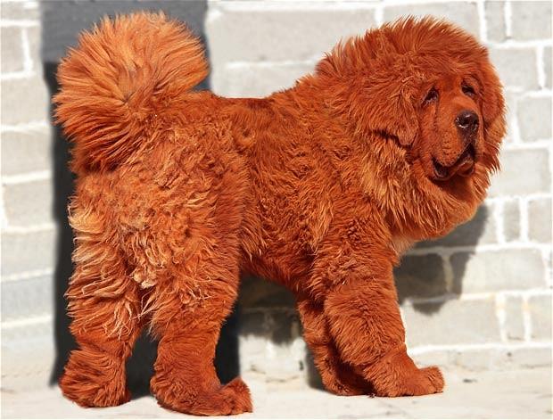 big splash million dog