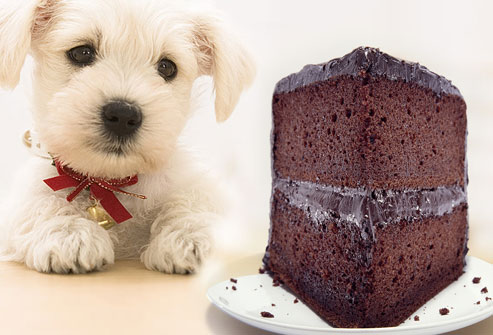 chocolate poisonous to dogs