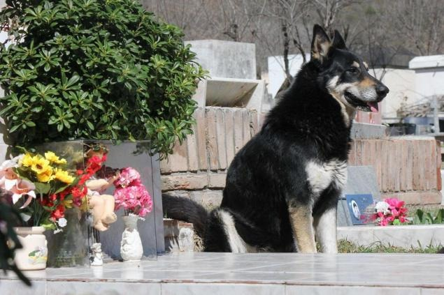 Capitan dog stays by owners grave for 6 years