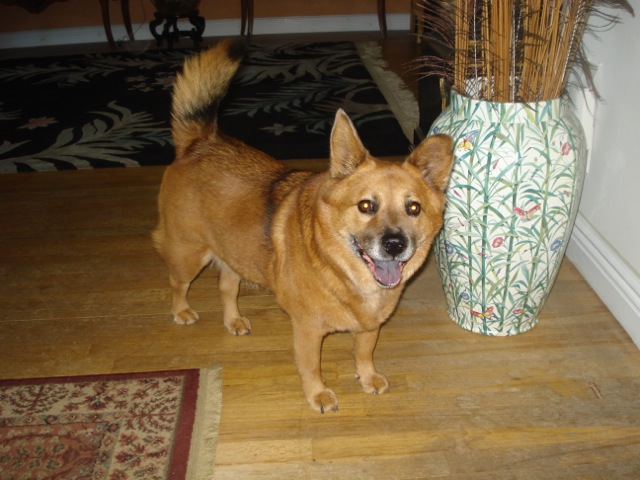 Maxi Old Dog