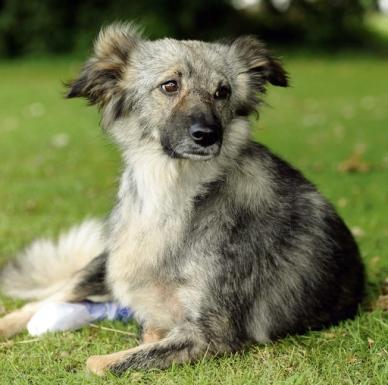 Glory Romanian One legged Dog Rescued