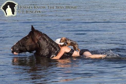 horse saves dog
