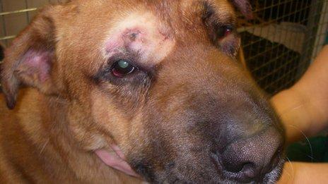 rocky dog shot by man