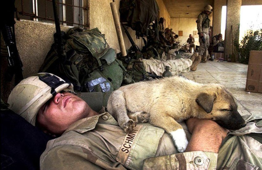 army dog nap time