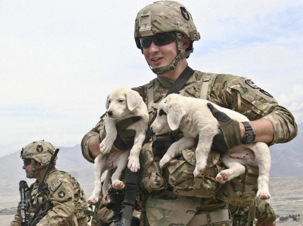 Army Dogs Puppies and Soldier